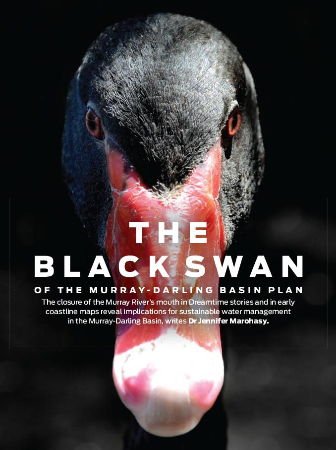 The Black Swan of the Murray-Darling Basin Plan