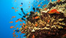 Scientists All At Sea With Alarmist Barrier Reef Warning