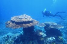 Measuring Old Corals & Coral Reefs (Part 1)