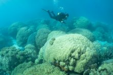 Measuring Old Corals & Coral Reefs (Part 2)
